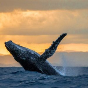 whale-watching3-1024×529